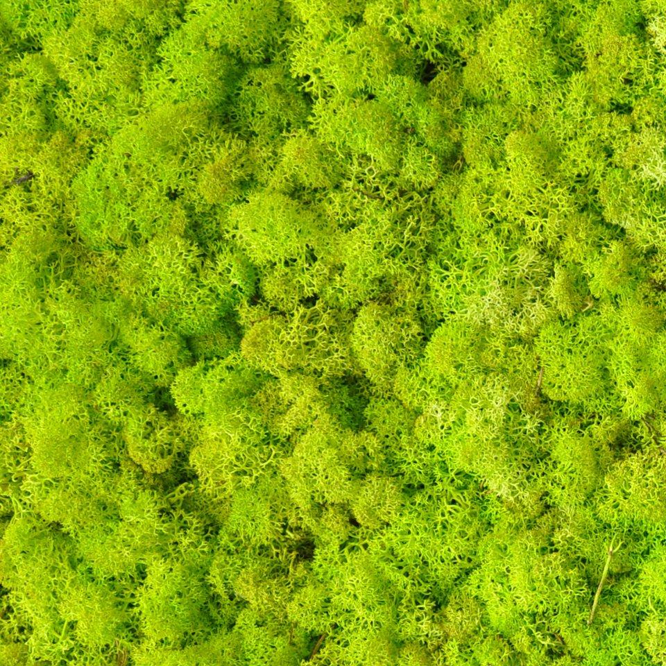 BENETTI_Grass.jpg