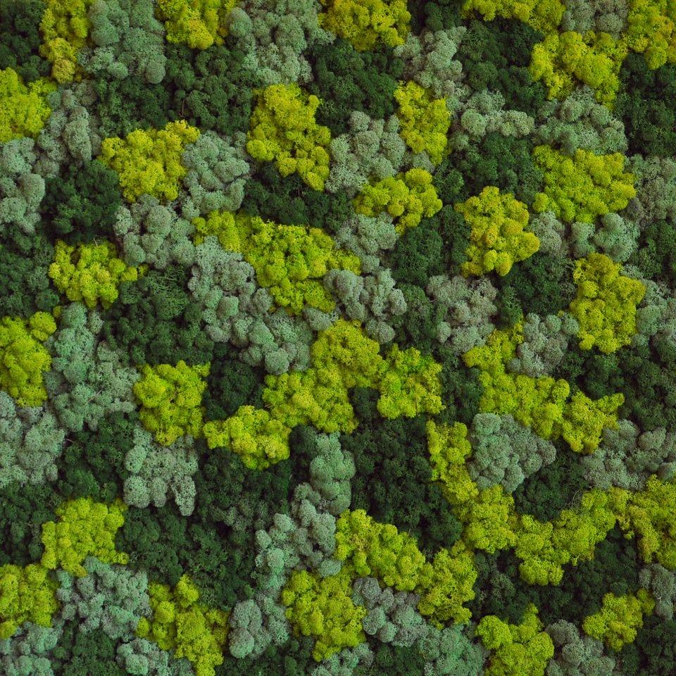 BENETTI_Green mix.jpg