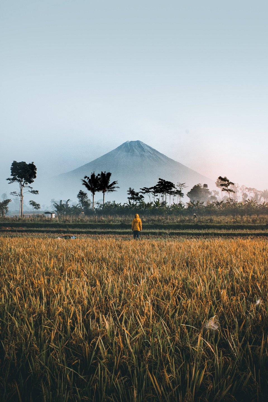 Indonesia3.jpeg