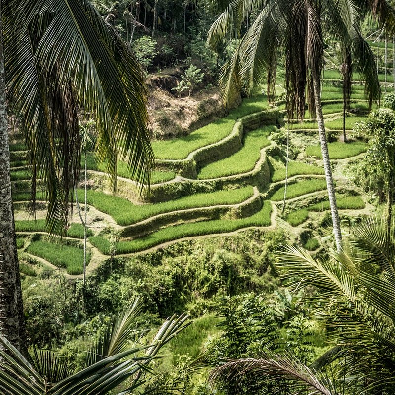 Indonesia6.jpeg