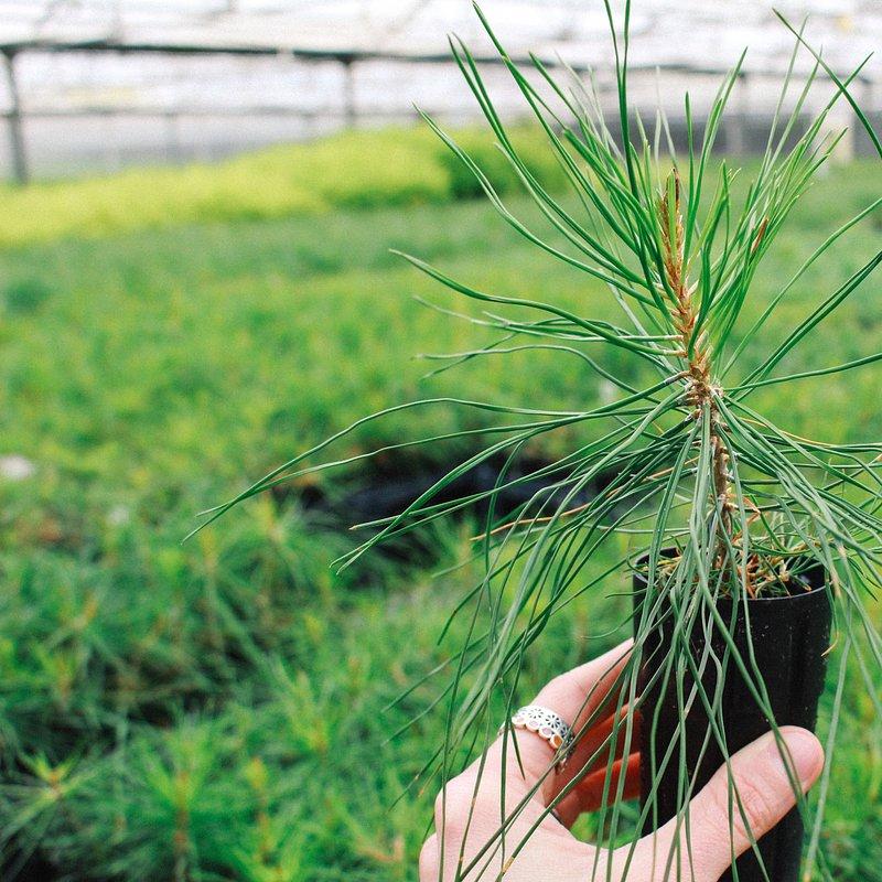 One Tree Planted048.jpg