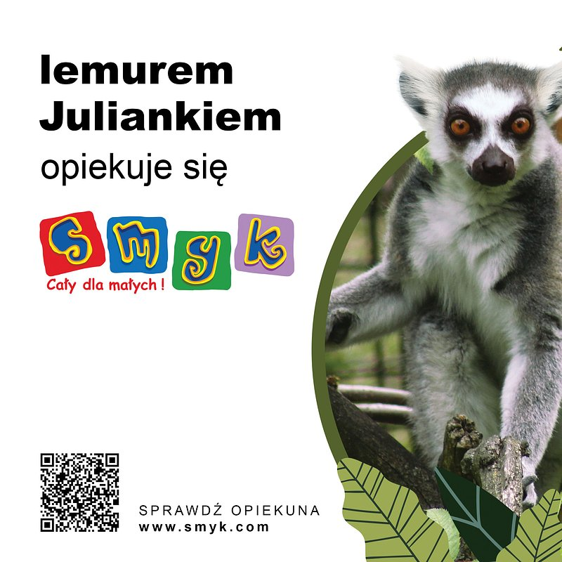 25x20-zoo-lemur.jpg