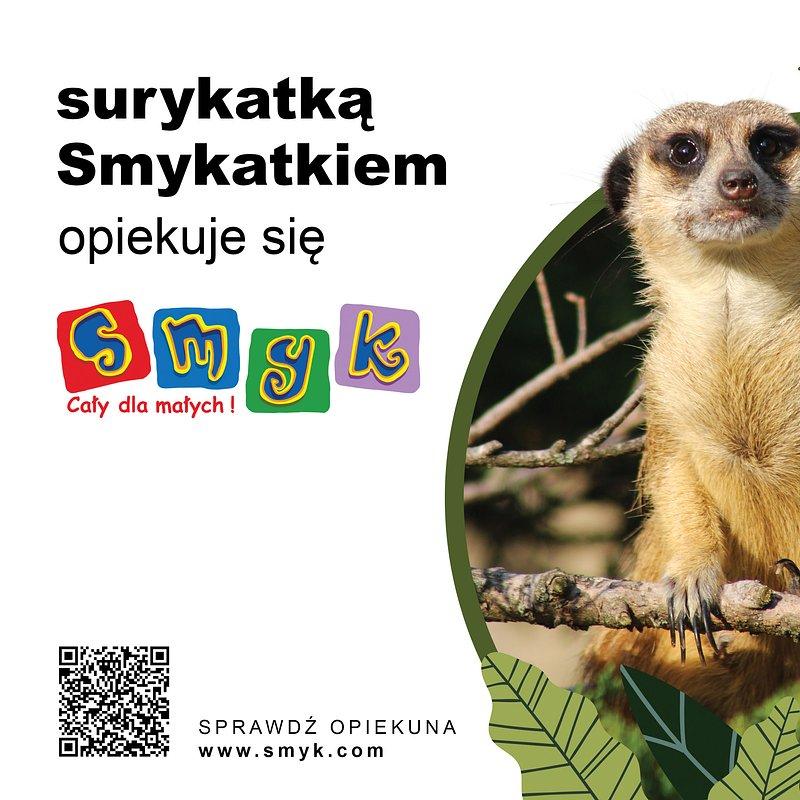 25x20-zoo-surykatka.jpg