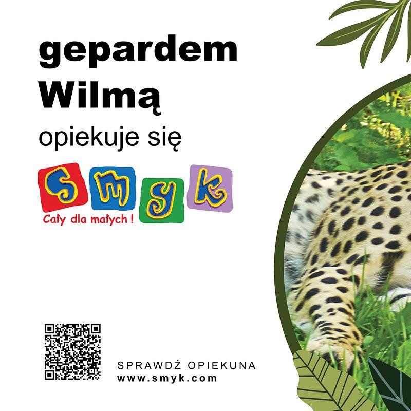 75x50-zoo-gepard.jpg
