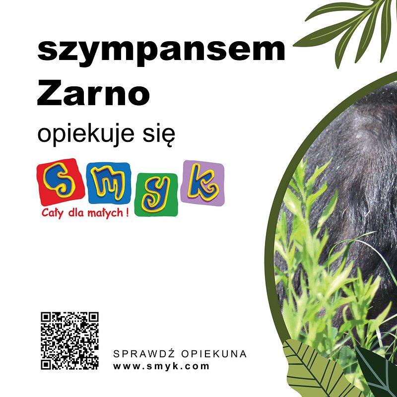 75x50-zoo-szympans.jpg