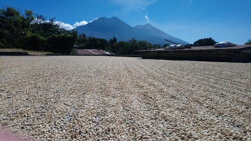 El Naranjo_suszenie kawy na patio.JPG