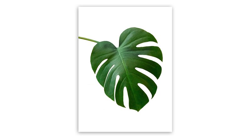 st474-black-monstera-32x42-f1.jpg