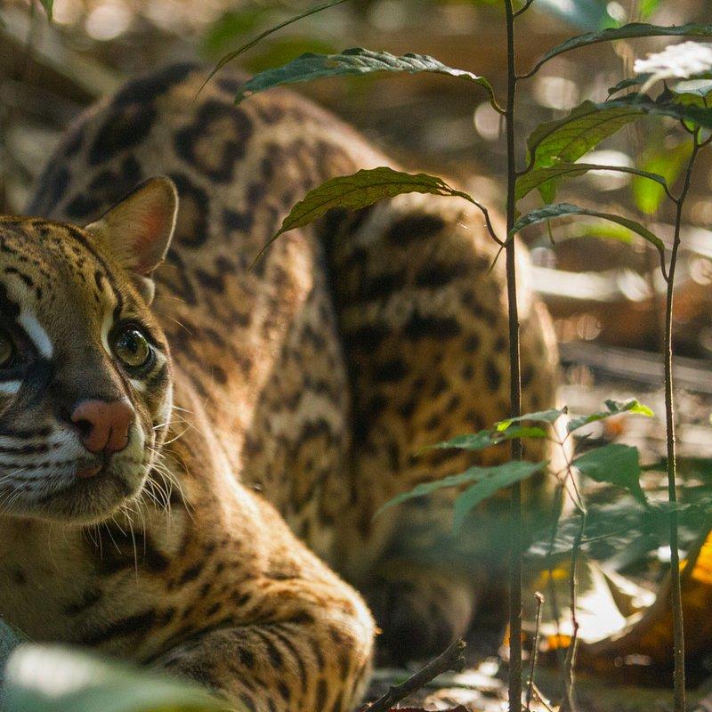 Jungles_EP101_HostilePlanet_06.jpg