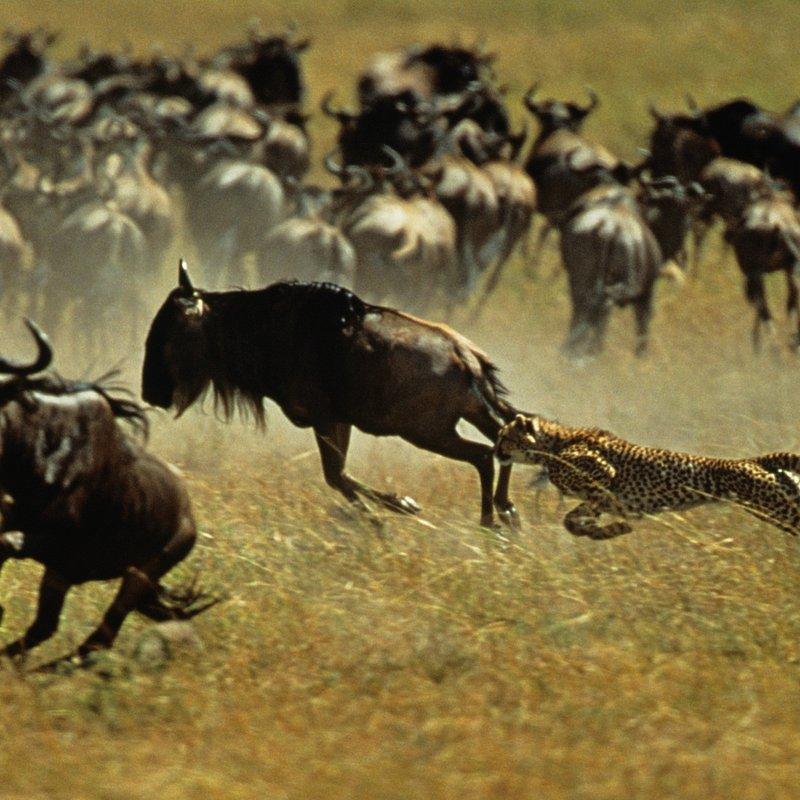 Najgroźniejsze zwierzęta świata 4.jpg