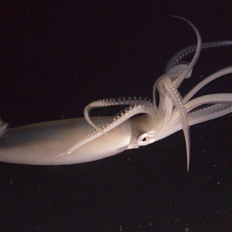 Podwodny świat Antarktydy 6.jpg