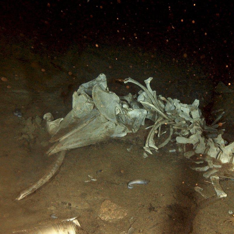 Podwodny świat Antarktydy 9.jpg