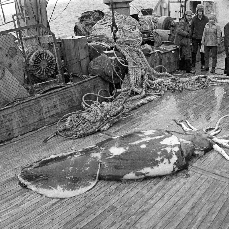 Podwodny świat Antarktydy 8.jpg