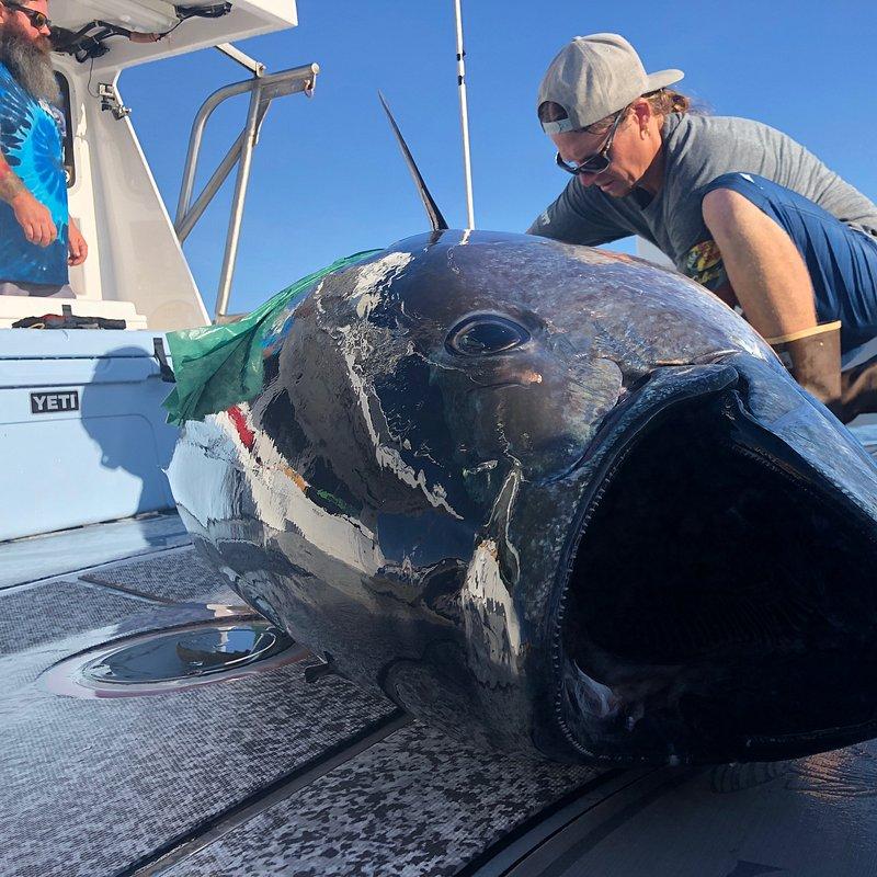 Stawka warta tuńczyka 2.jpg