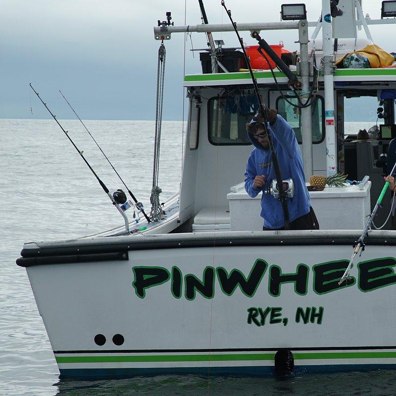 Stawka warta tuńczyka 4.jpg