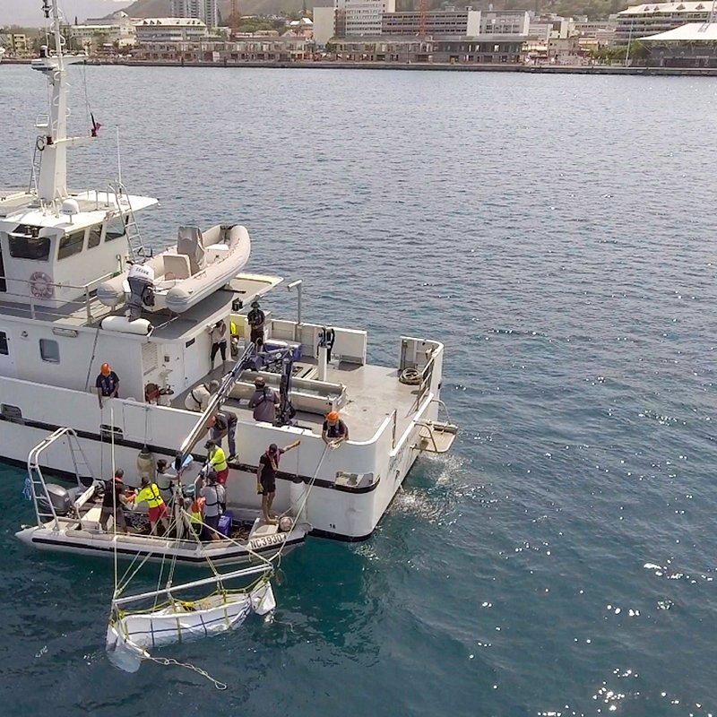 Relokacja rekinów 2.jpg