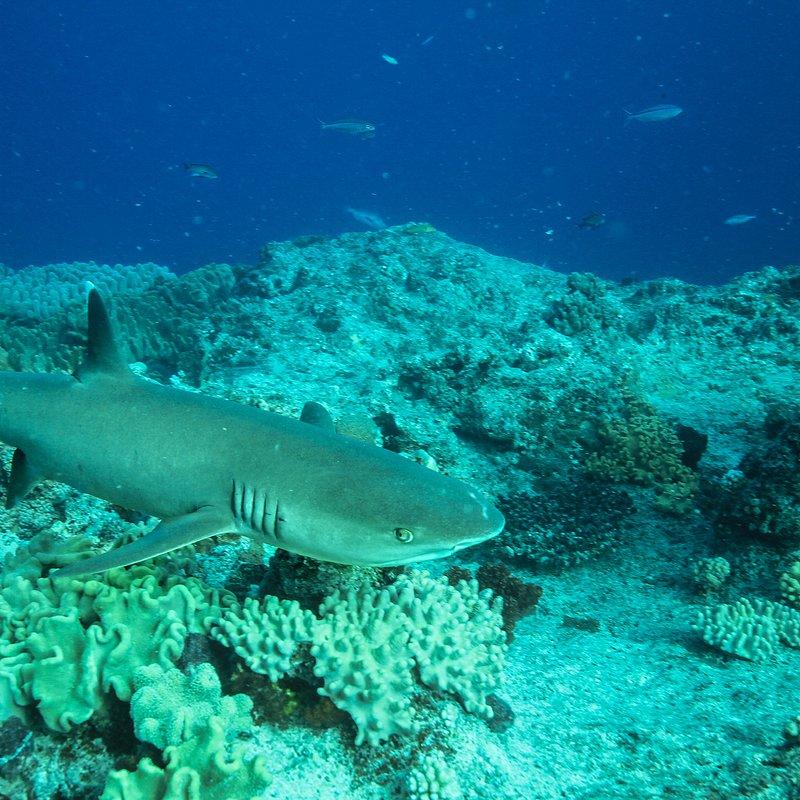 Relokacja rekinów.jpg