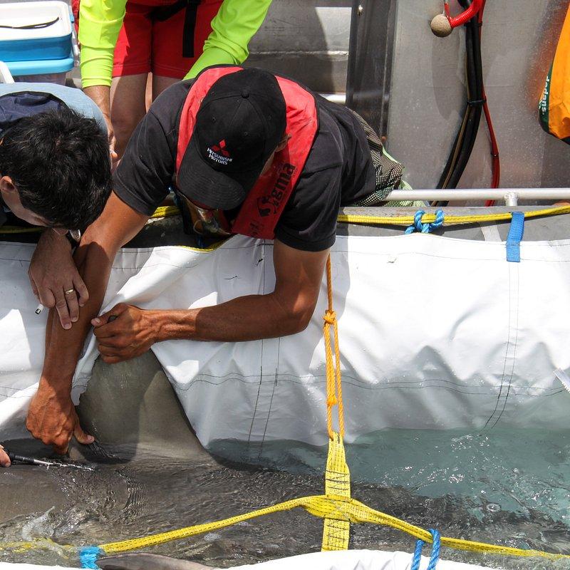 Relokacja rekinów 3.jpg