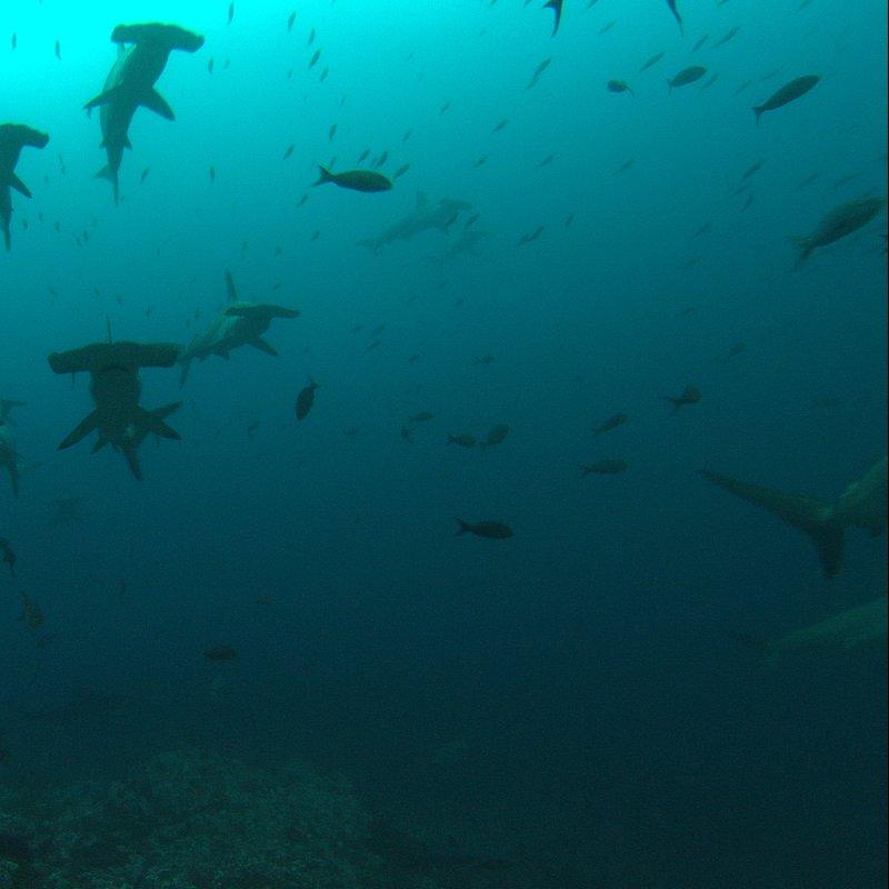 Strefa rekina – polowanie 3.jpg