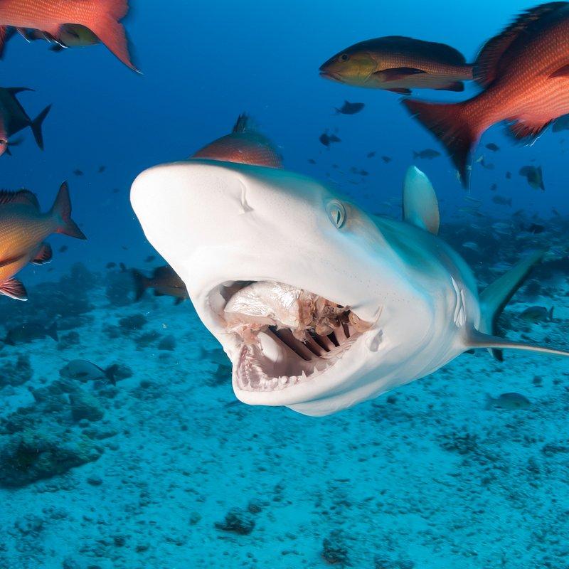 Strefa rekina – polowanie.jpg