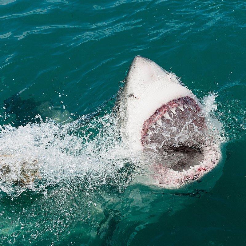 Strefa rekina – polowanie 2.jpg