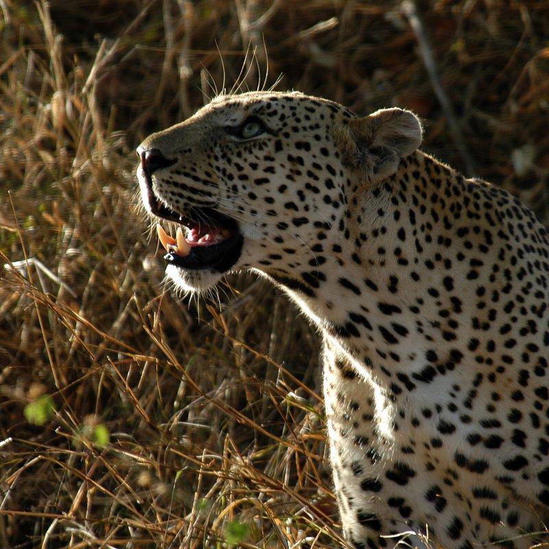Najgroźniejsze zwierzęta Afryki 2.jpg