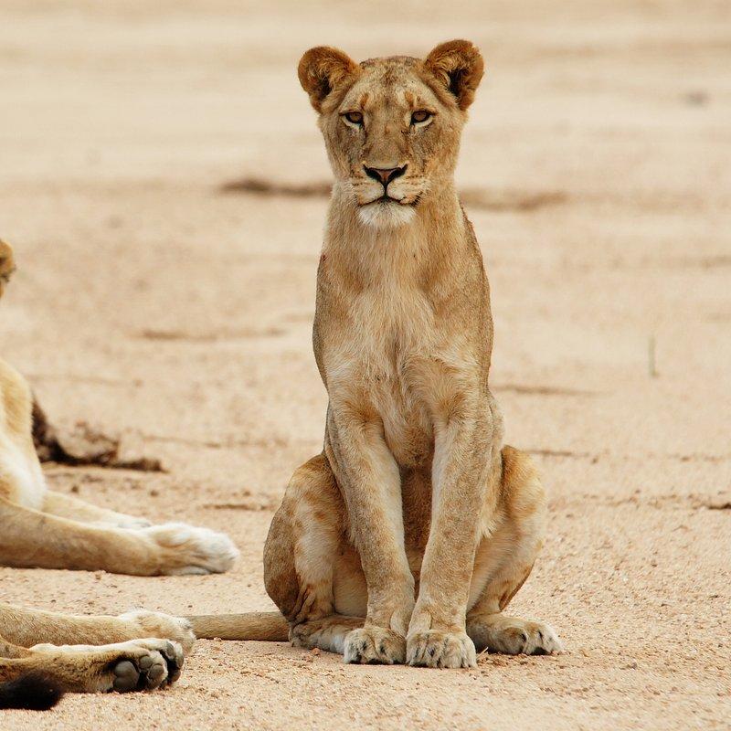 Najgroźniejsze zwierzęta Afryki 3.jpg