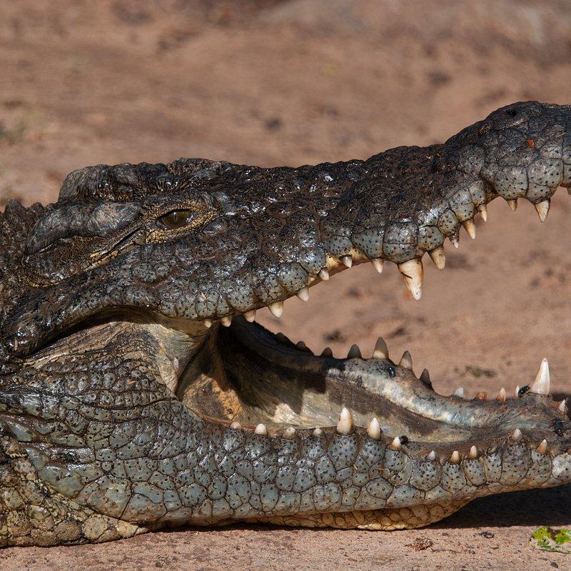Najgroźniejsze zwierzęta Afryki.jpg