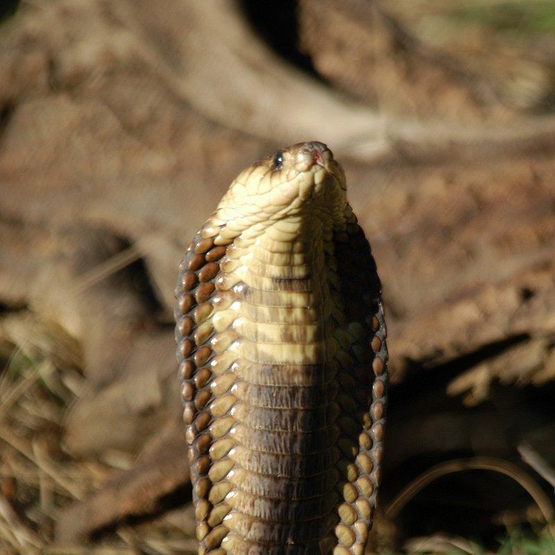 Zabójcze węże.jpg