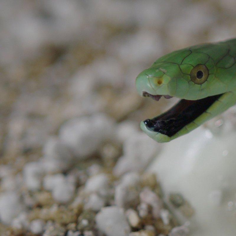 Potworne węże.jpg