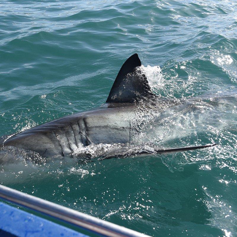 Atak Rekina 3.jpg