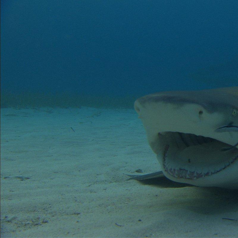 SharkKillZone_11.jpg