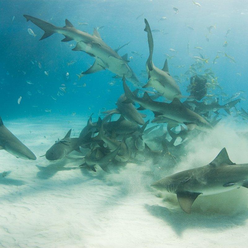 SharkKillZone_1.jpg