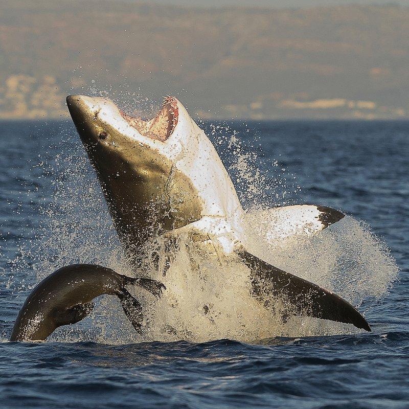 SharkKillZone_6.jpg