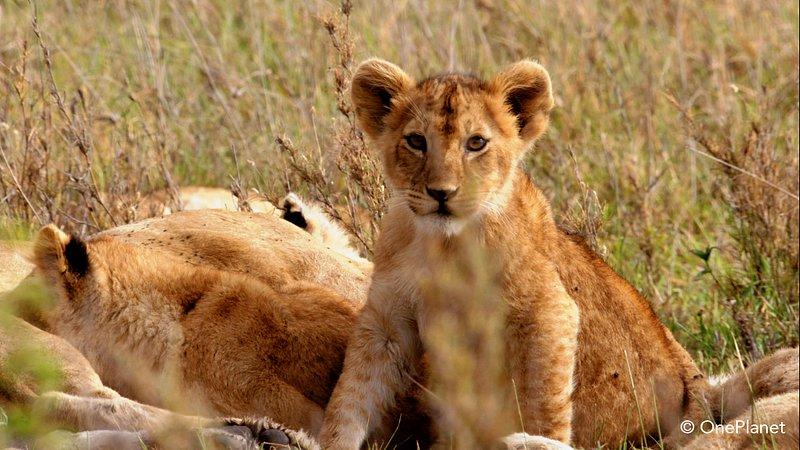 Urodzone w Afryce 3.jpg