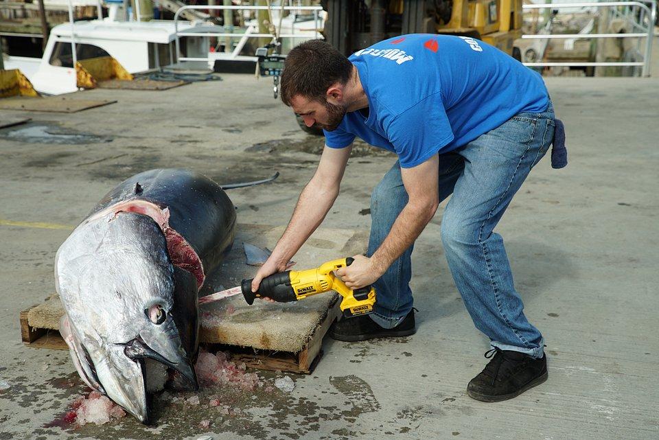 Stawka warta tuńczyka 6.jpg