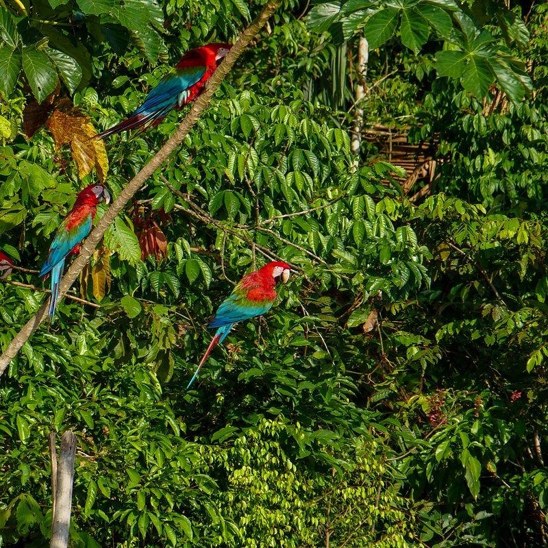 Amazonia 5.jpg