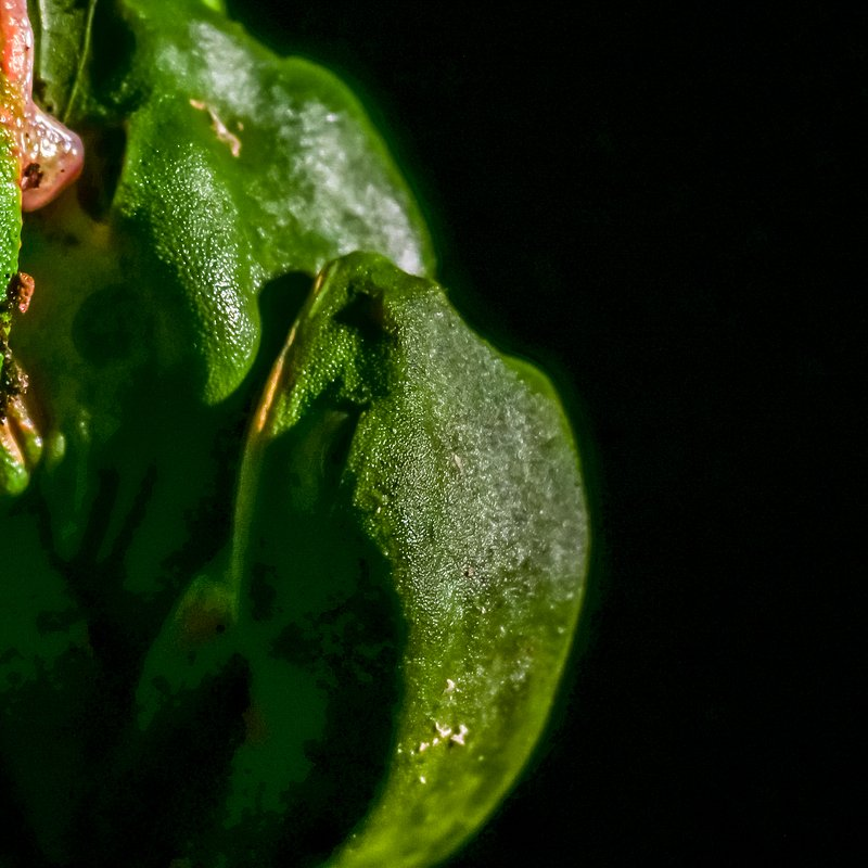 Amazonia 7.jpg