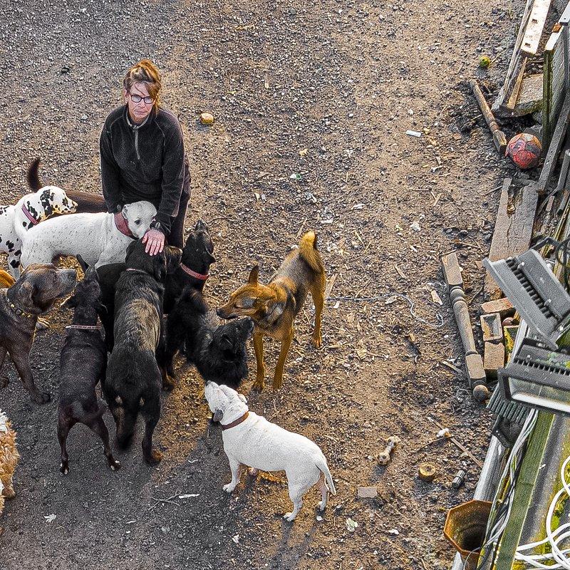 106 psów w moim dmu.jpg