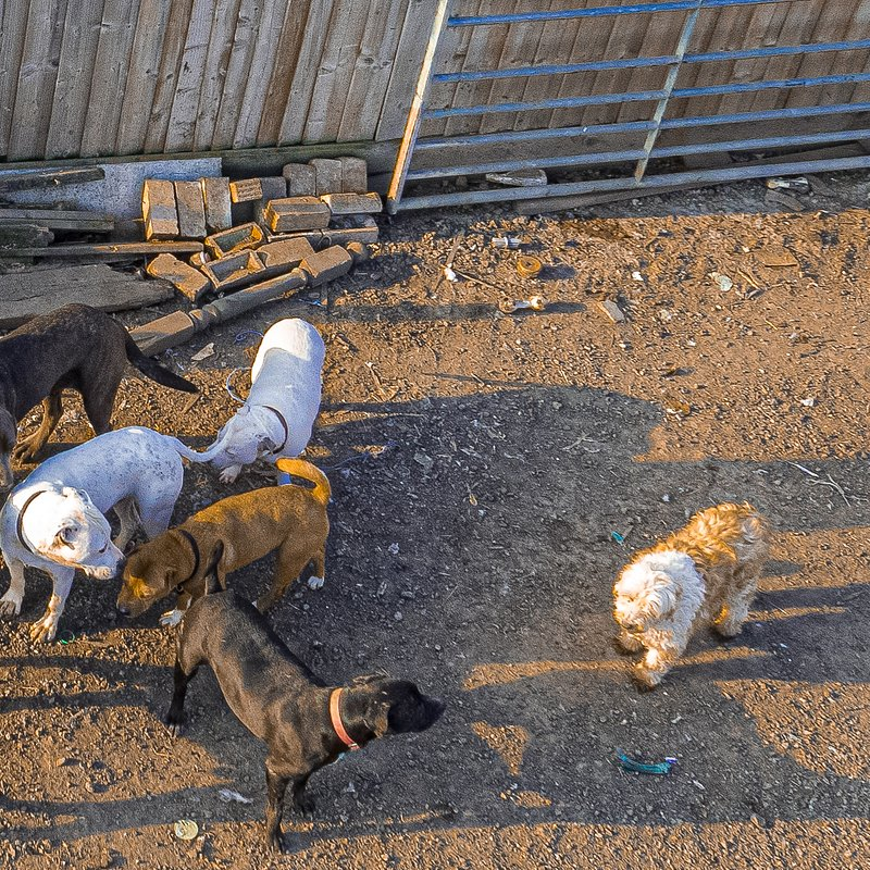 106 psów w moim dmu 2.jpg