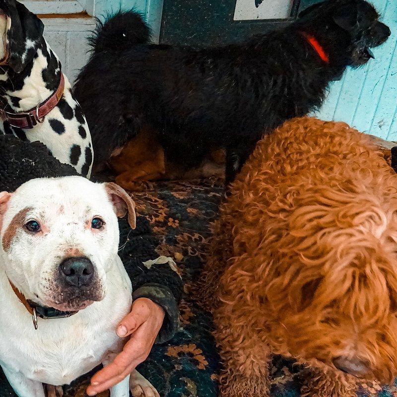 106 psów w moim dmu 6.jpg