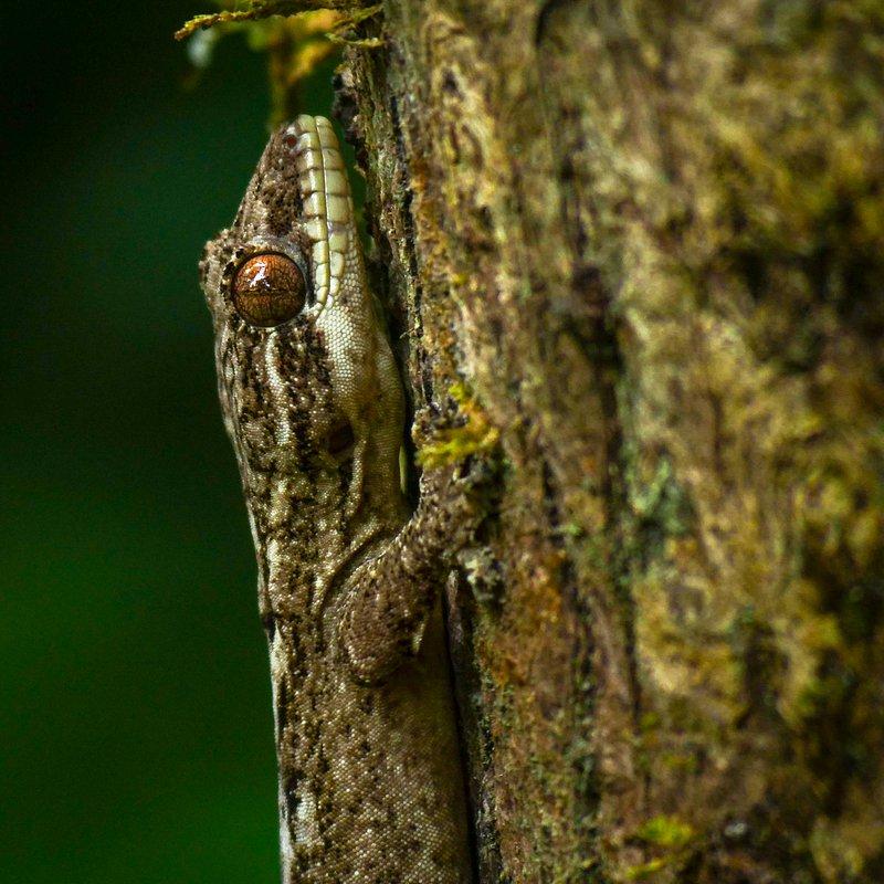 Amazonia 2.jpg