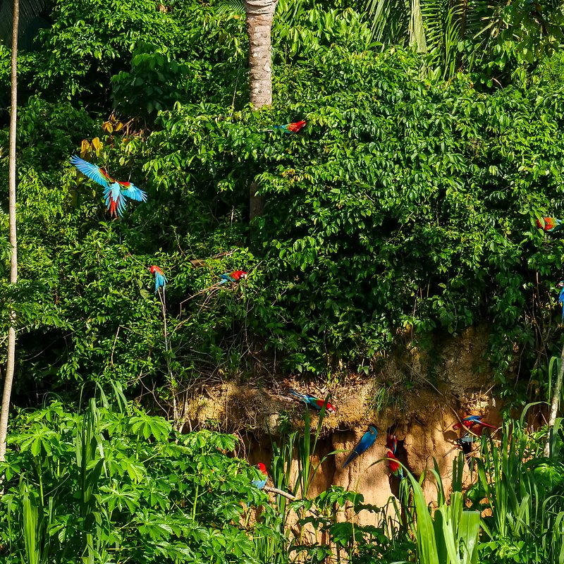 Amazonia 4.jpg