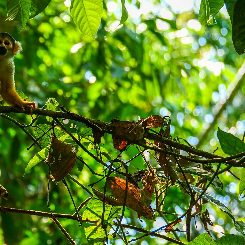 Amazonia 11.jpg