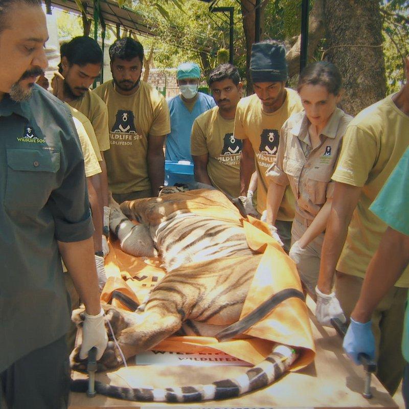 Ratownicy z indyjskiej dżungli 4.JPG