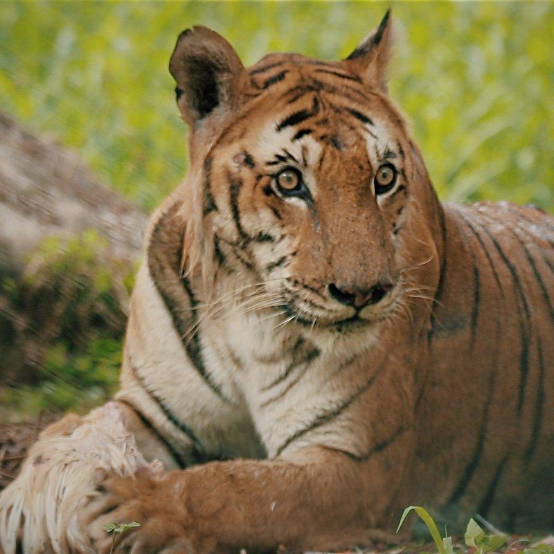 Ratownicy z indyjskiej dżungli.JPG