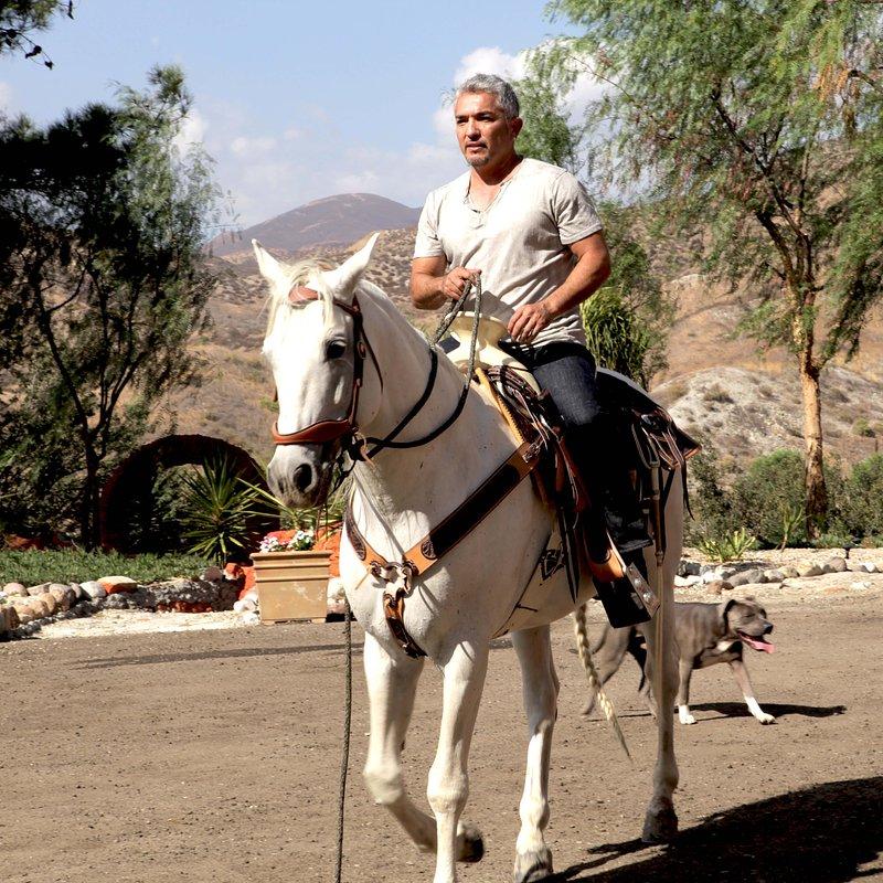 Cesar Millan historia (4).JPG