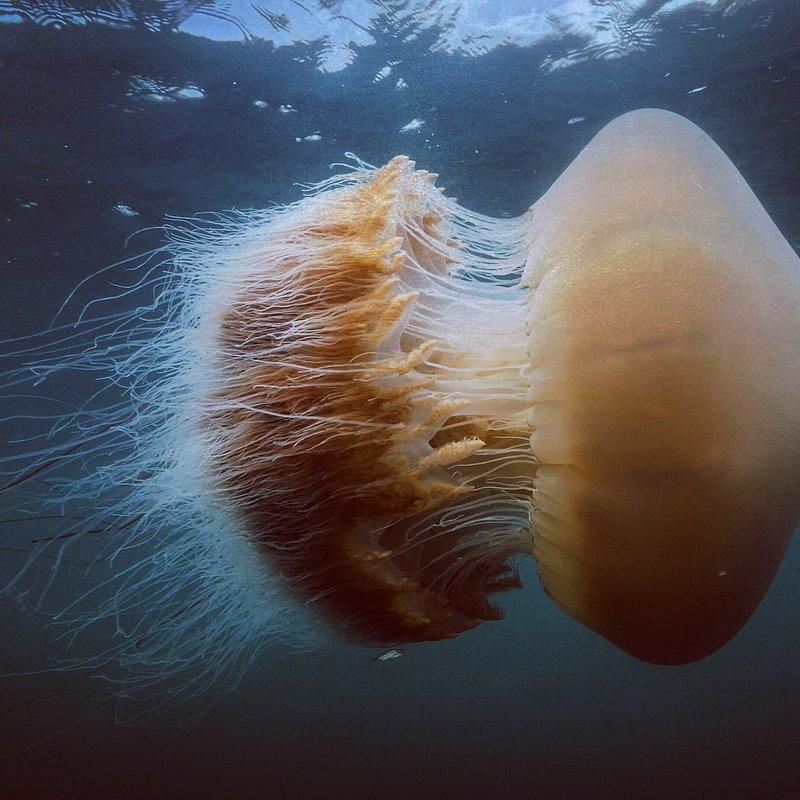 Skarby oceanu 4.jpg