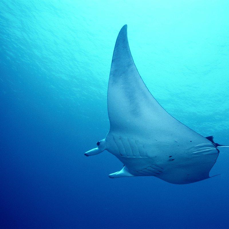 Myśliwi z morskich głębin (1).JPG