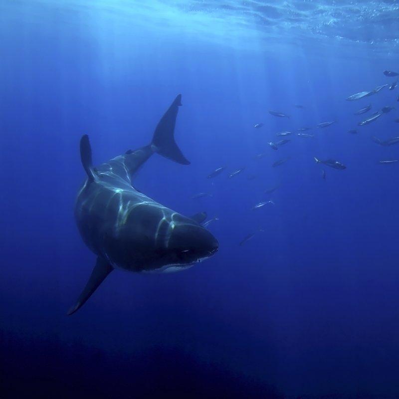 Myśliwi z morskich głębin (3).JPG