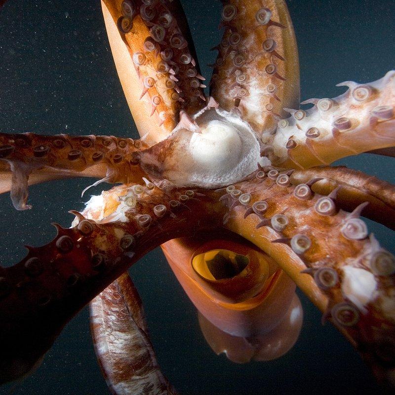 Myśliwi z morskich głębin (2).JPG